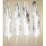 Immature Bald Eagle Tail Feather [Salt & Pepper]