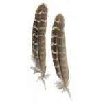 Natural Barred Turkey Wing Feathers