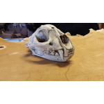 replica mt lion skull