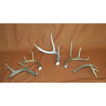Three and Four Point Deer Horns