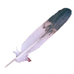 Immature Golden Eagle Feather