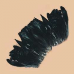 "Rooster Tail Feathers (6"" to 8"")"
