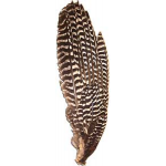 Primary Bronze Turkey Wing