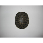 Red Ear Slider Shell