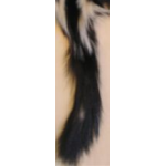 Skunk Tail