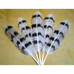 Snow Owl Feather
